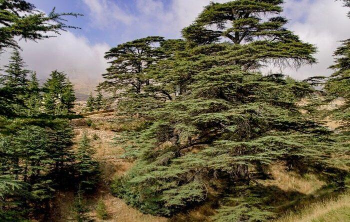 Libano la terra dei cedri